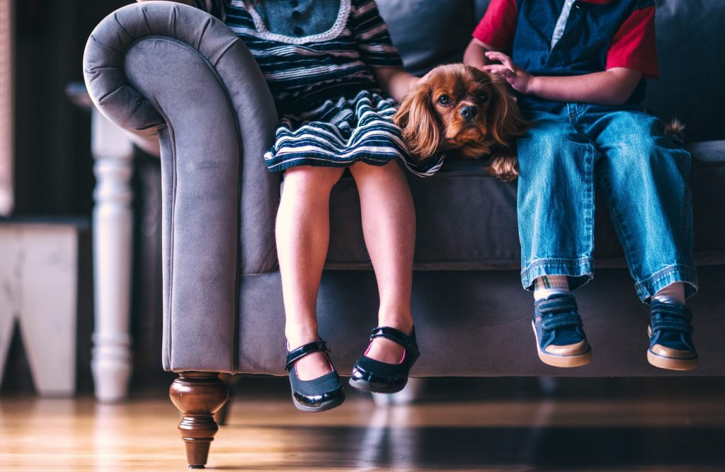 The Benefits of Having Pets For Children Coping with Divorce
